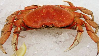 Whole Cooked Dungeness Crab (Price is Per Lb.) in Local Wild Caught Sustainable Seafood at Ocean Bleu Seafoods