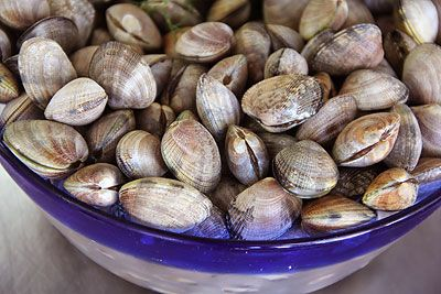 Steamer Clams in Local Wild Caught Sustainable Seafood at Ocean Bleu Seafoods
