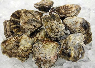 Yaquina Bay Oysters - Dozen in Local Wild Caught Sustainable Seafood at Ocean Bleu Seafoods